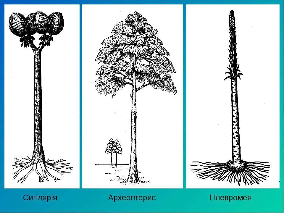 Сигілярія Археоптерис Плевромея