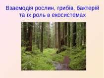 Взаємодія рослин, грибів, бактерій та їх роль в екосистемах
