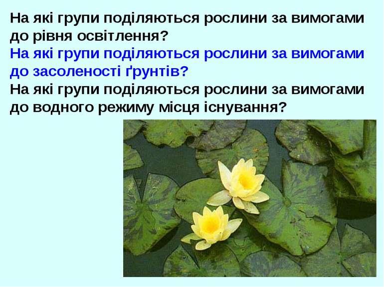 На які групи поділяються рослини за вимогами до рівня освітлення? На які груп...