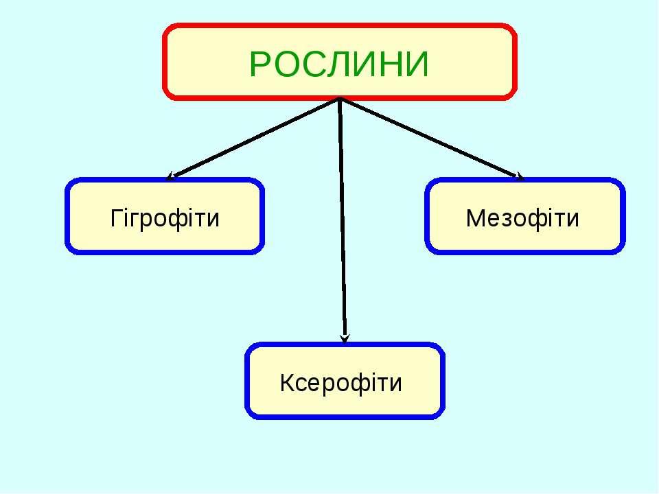 РОСЛИНИ Ксерофіти Мезофіти Гігрофіти