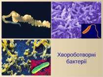 Хвороботворні бактерії
