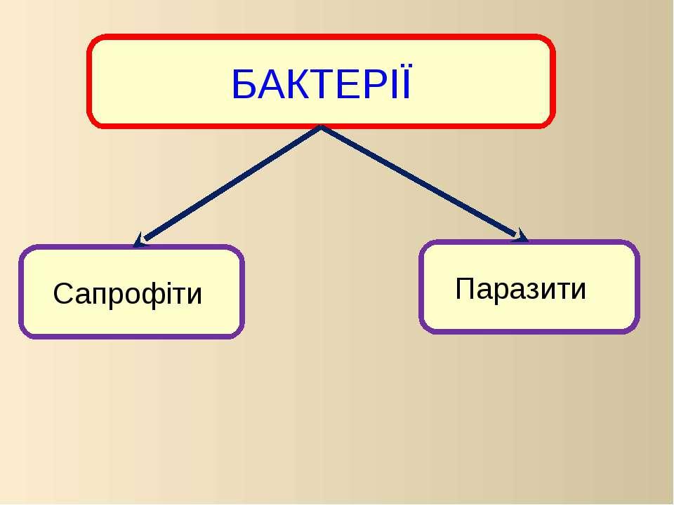 БАКТЕРІЇ Паразити Сапрофіти