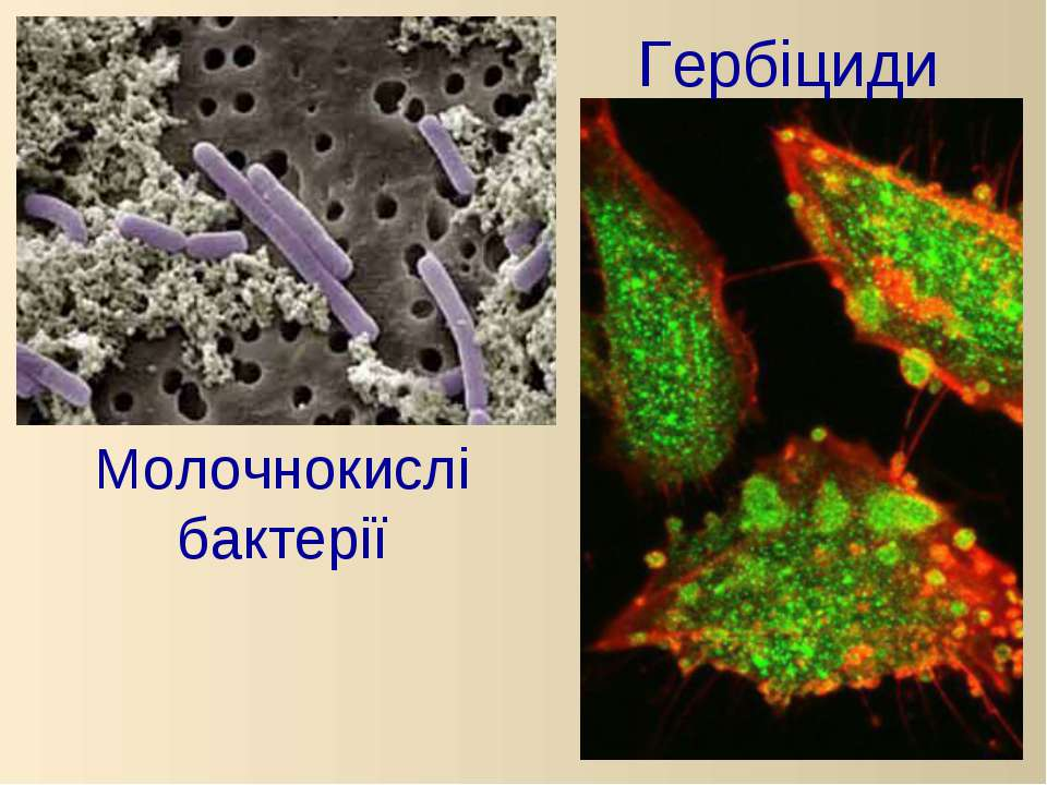 Молочнокислі бактерії Гербіциди