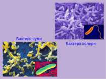 Бактерії холери Бактерії чуми