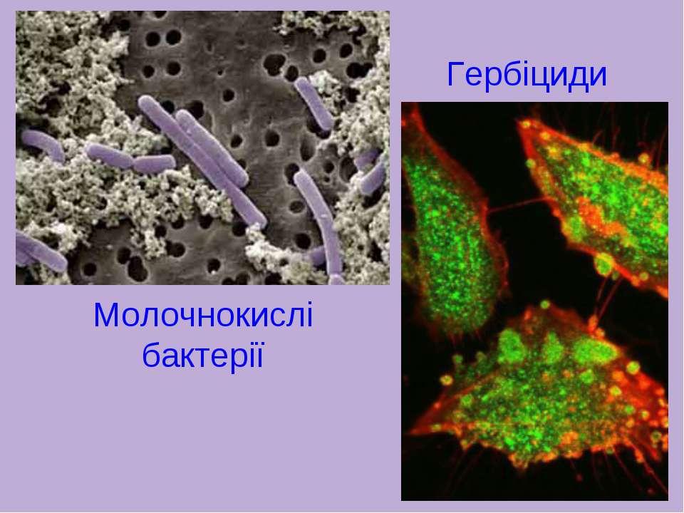 Гербіциди Молочнокислі бактерії
