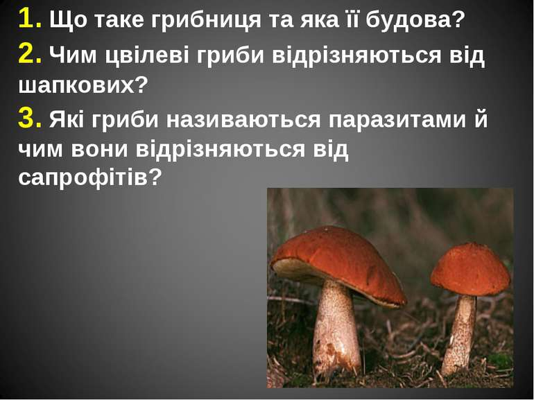 1. Що таке грибниця та яка її будова? 2. Чим цвілеві гриби відрізняються від ...