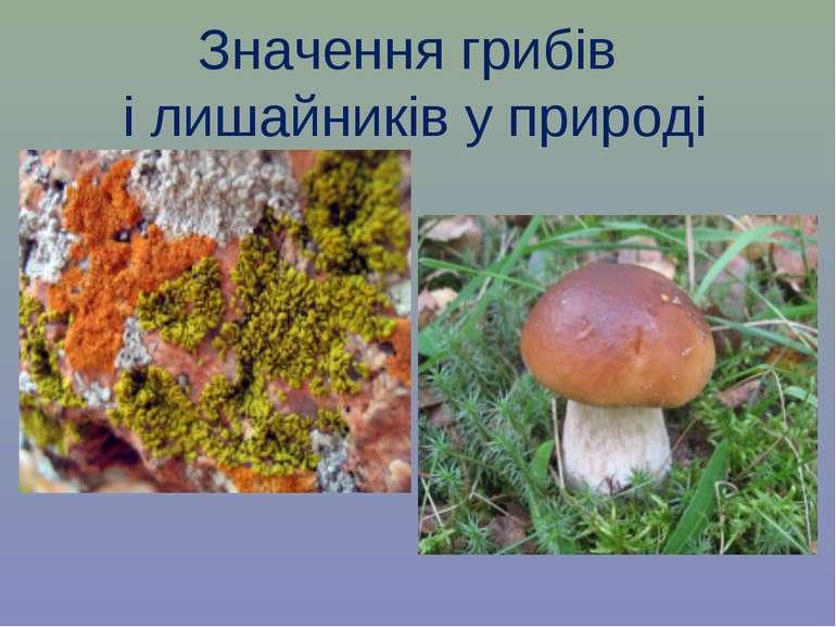 Значення грибів і лишайників у природі