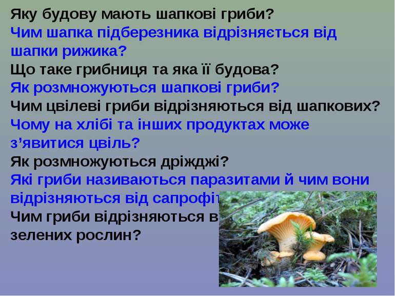 Яку будову мають шапкові гриби? Чим шапка підберезника відрізняється від шапк...