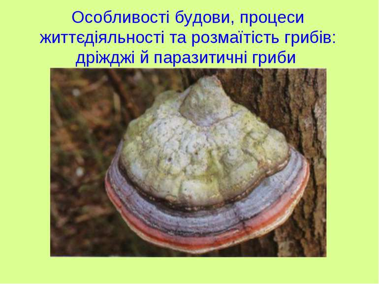 Особливості будови, процеси життєдіяльності та розмаїтість грибів: дріжджі й ...