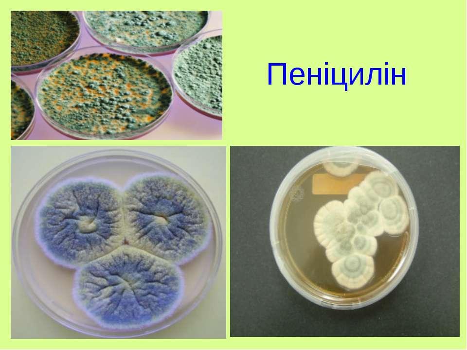 Пеніцилін