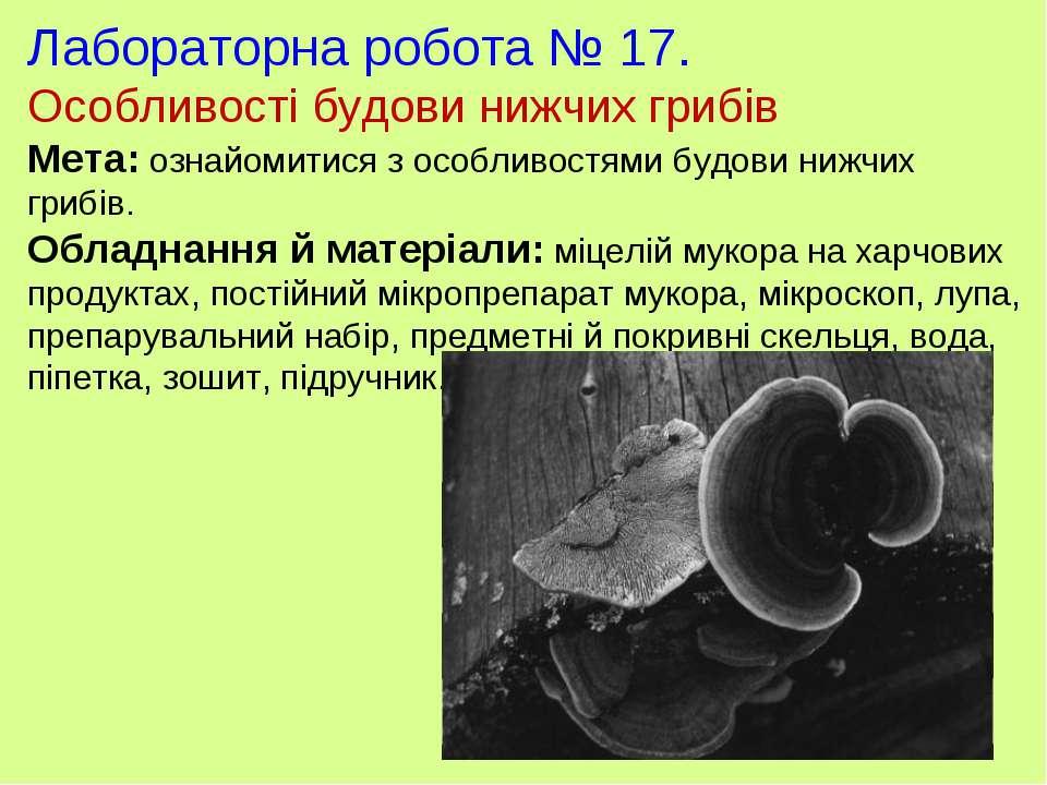 Лабораторна робота № 17. Особливості будови нижчих грибів Мета: ознайомитися ...