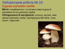 Лабораторна робота № 16. Будова шапкових грибів Мета: ознайомитися з особливо...