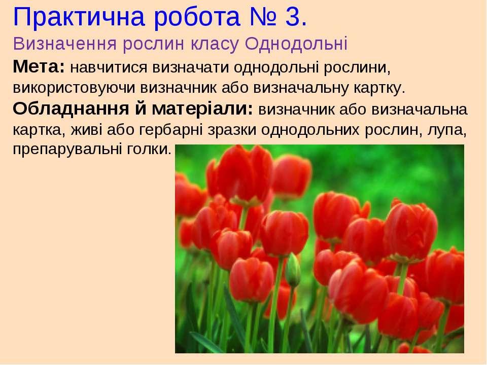 Практична робота № 3. Визначення рослин класу Однодольні Мета: навчитися визн...