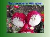 Пасльонові й Айстрові