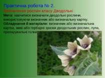 Практична робота № 2. Визначення рослин класу Дводольні Мета: навчитися визна...