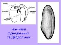 Насінини Однодольних та Дводольних
