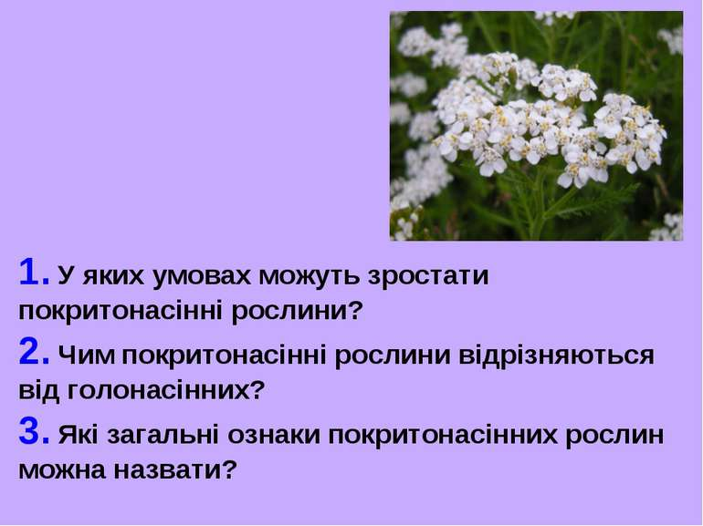 1. У яких умовах можуть зростати покритонасінні рослини? 2. Чим покритонасінн...
