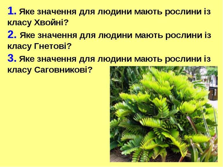 1. Яке значення для людини мають рослини із класу Хвойні? 2. Яке значення для...
