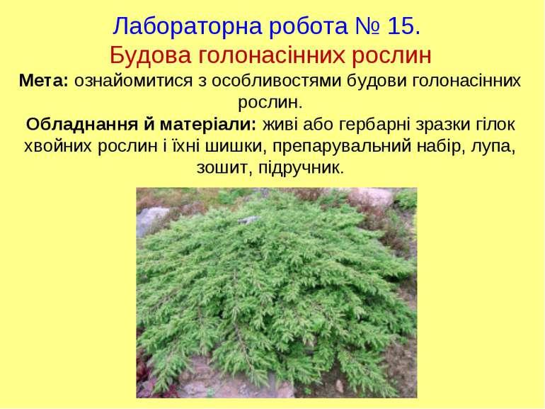 Лабораторна робота № 15. Будова голонасінних рослин Мета: ознайомитися з особ...
