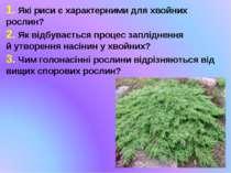 1. Які риси є характерними для хвойних рослин? 2. Як відбувається процес запл...