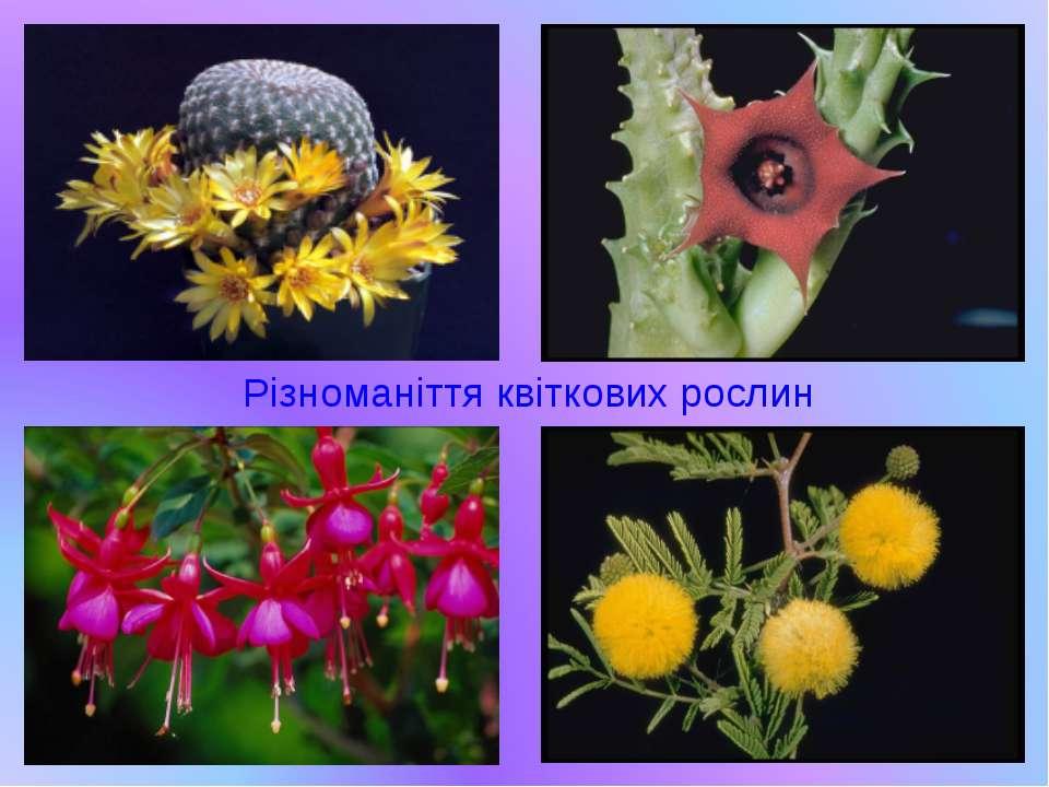 Різноманіття квіткових рослин