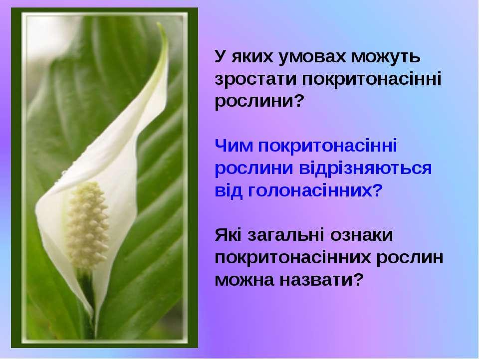 У яких умовах можуть зростати покритонасінні рослини? Чим покритонасінні росл...