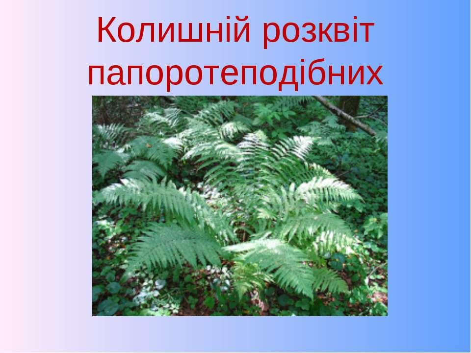 Колишній розквіт папоротеподібних