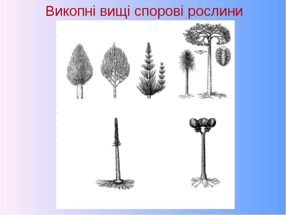 Викопні вищі спорові рослини