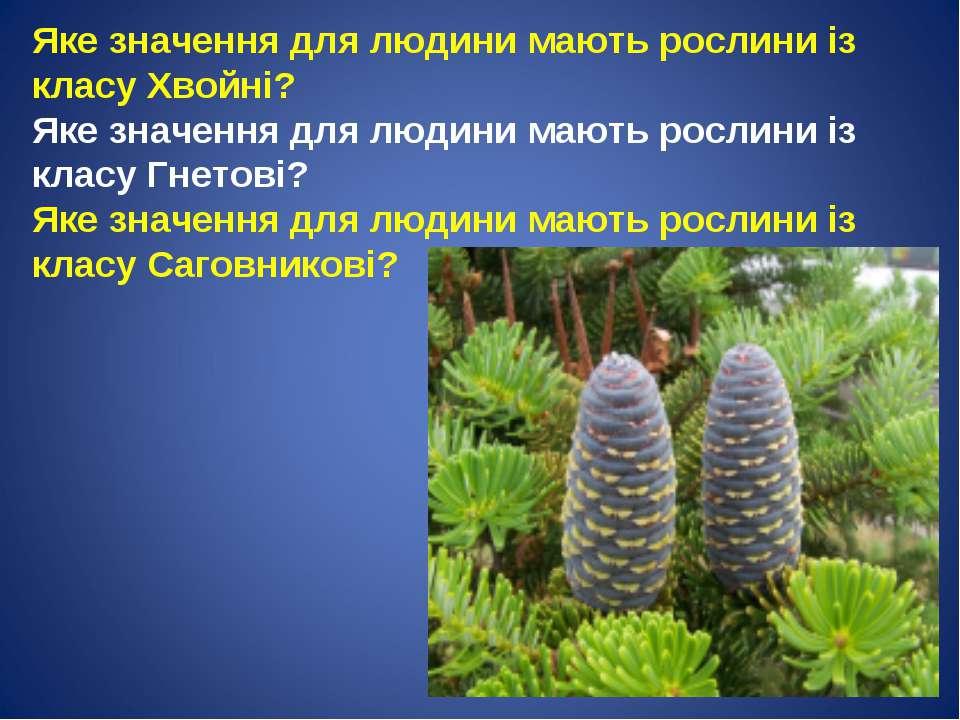 Яке значення для людини мають рослини із класу Хвойні? Яке значення для людин...