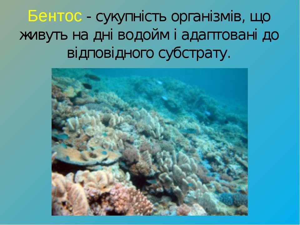 Бентос- сукупність організмів, що живуть на дні водойм і адаптовані до відпо...
