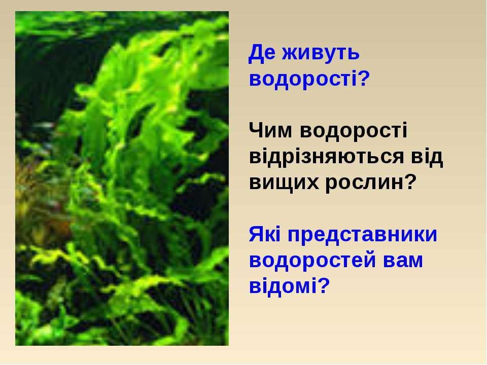 Де живуть водорості? Чим водорості відрізняються від вищих рослин? Які предст...