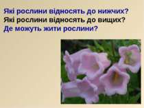 Які рослини відносять до нижчих? Які рослини відносять до вищих? Де можуть жи...