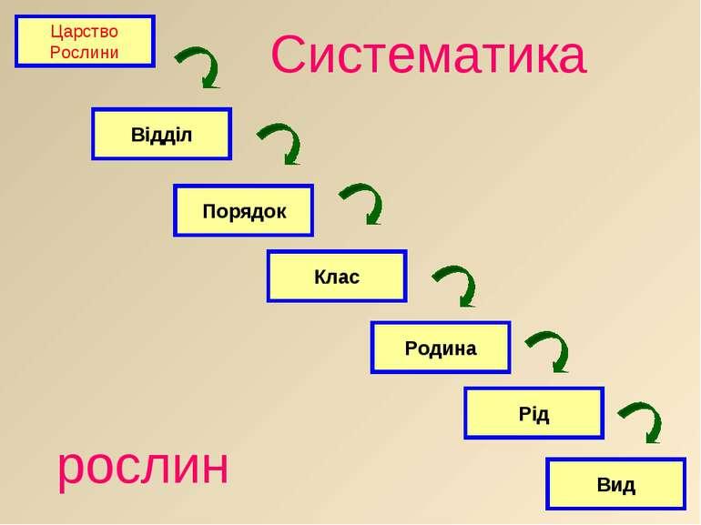 Царство Рослини Відділ Порядок Клас Родина Рід Вид рослин Систематика