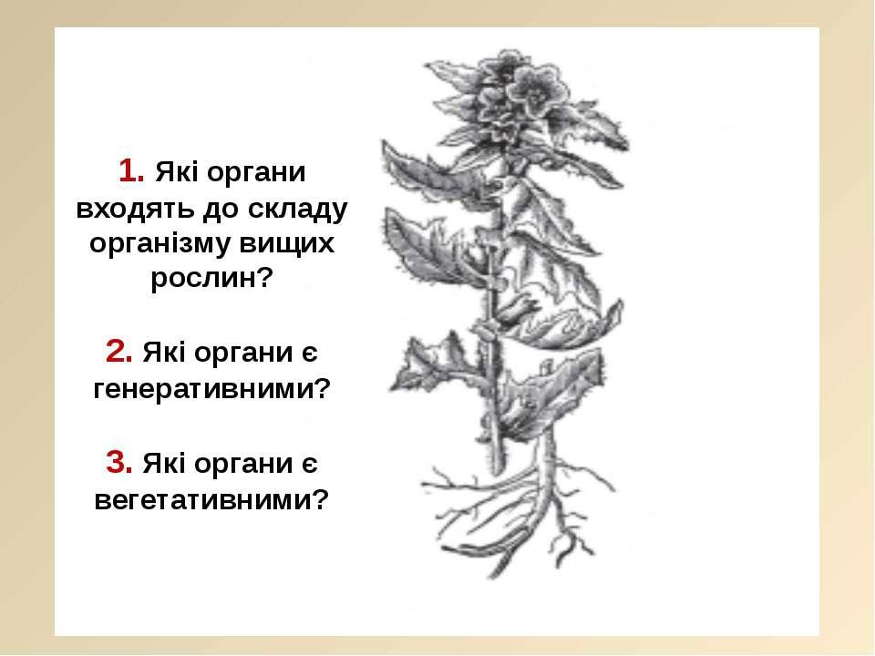 1. Які органи входять до складу організму вищих рослин? 2. Які органи є генер...