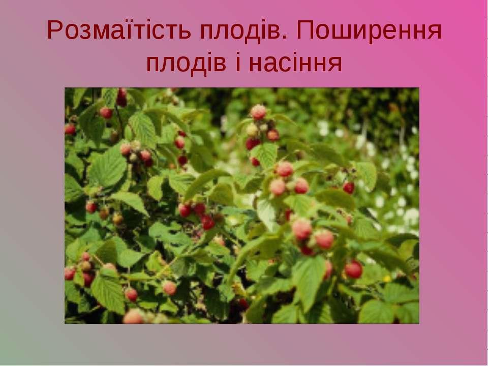 Розмаїтість плодів. Поширення плодів і насіння