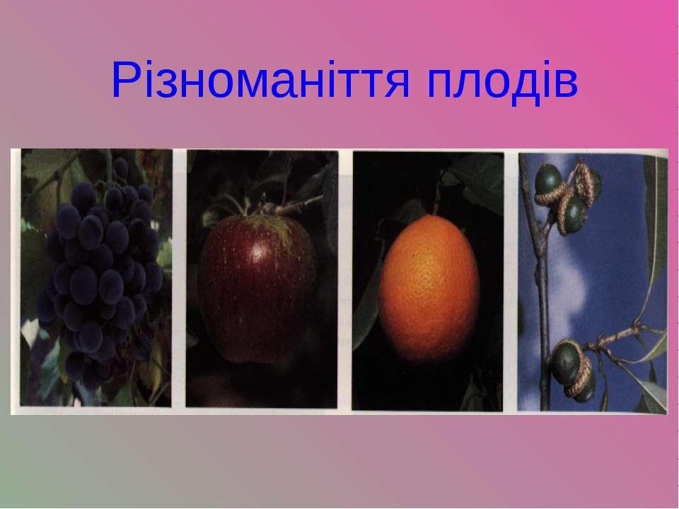 Різноманіття плодів