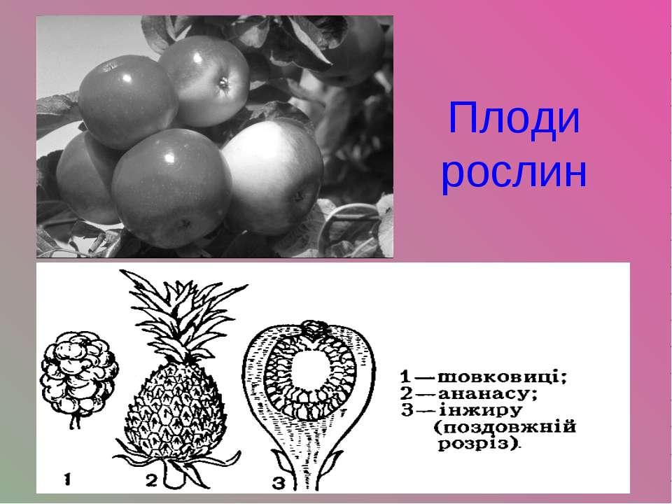 Плоди рослин