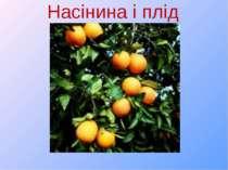 Насінина і плід