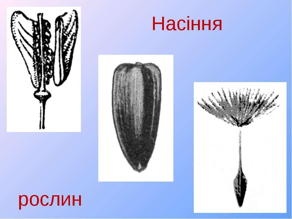 Насіння рослин