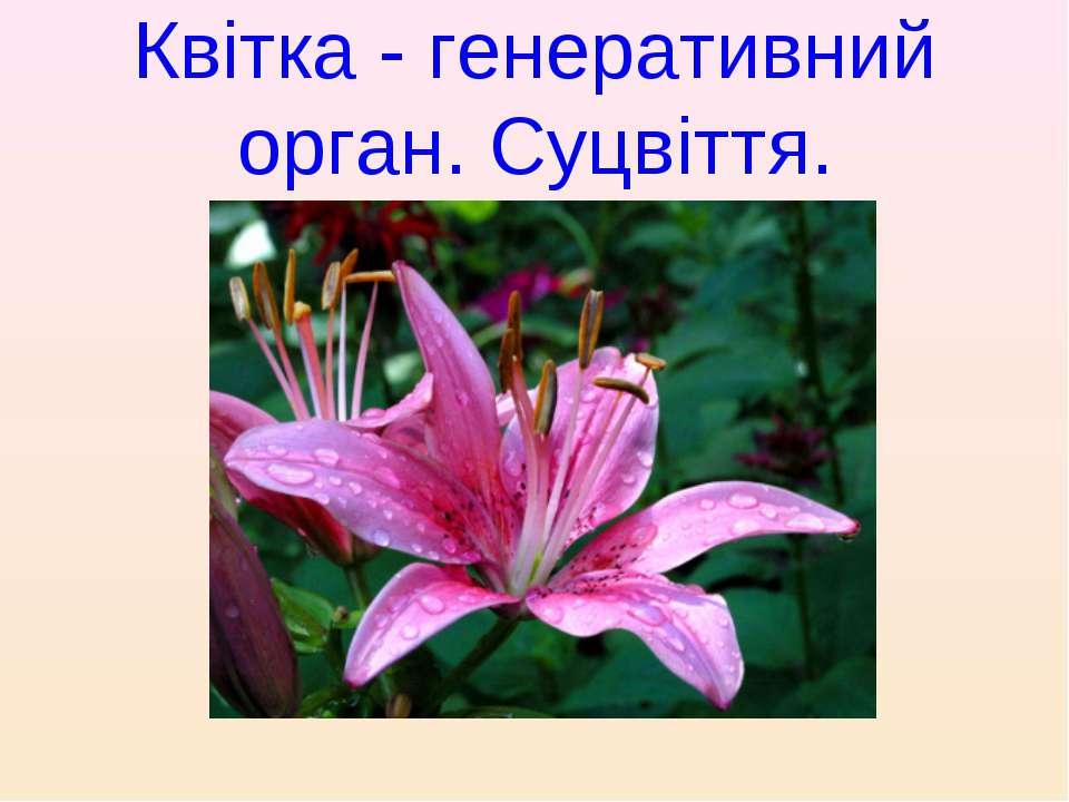 Квітка- генеративний орган. Суцвіття.