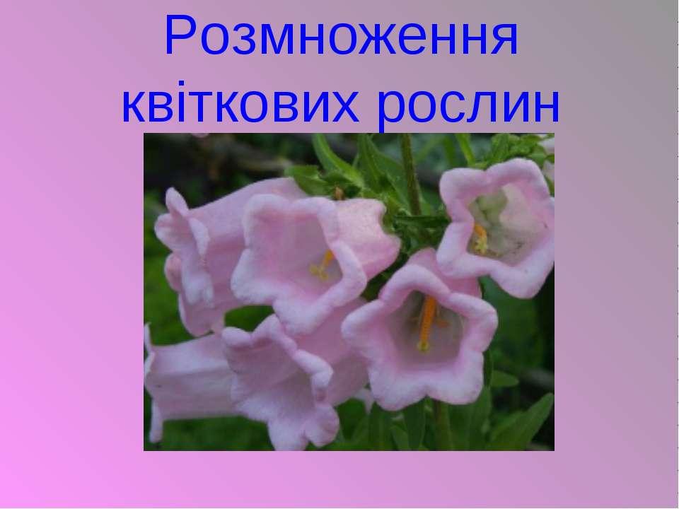 Розмноження квіткових рослин