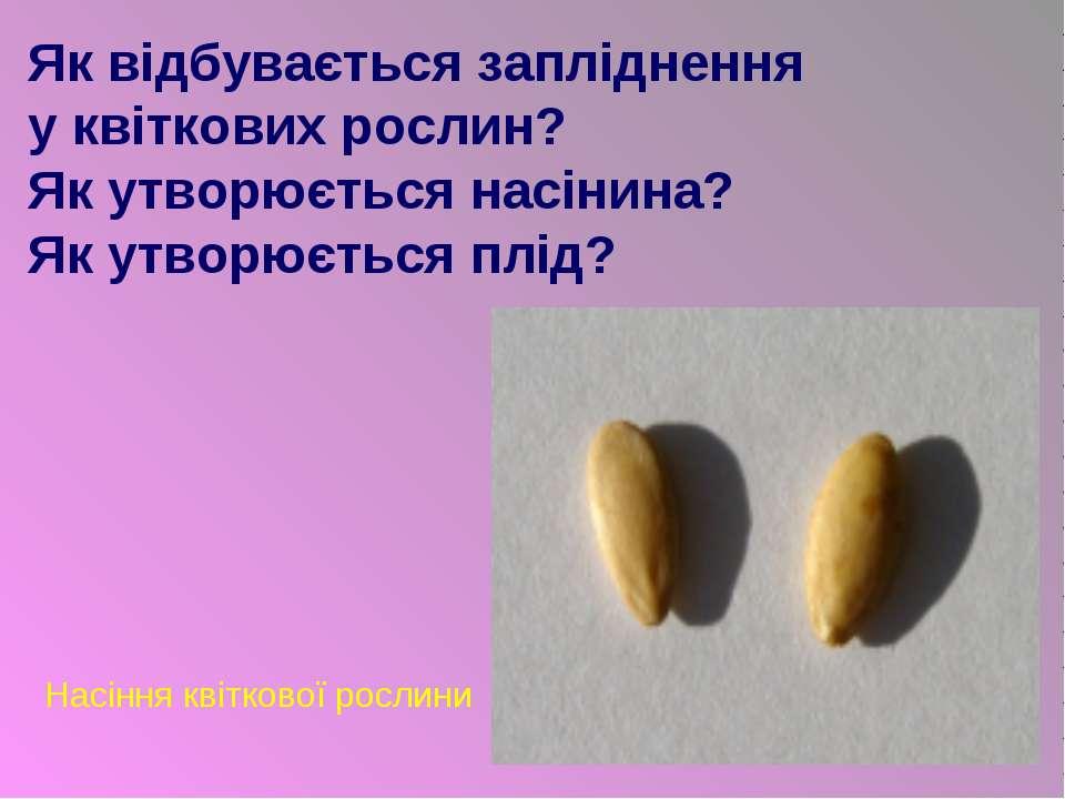 Як відбувається запліднення у квіткових рослин? Як утворюється насінина? Як у...
