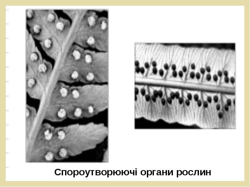 Спороутворюючі органи рослин