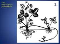Типи вегетативного розмноження 1.