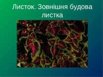 Листок. Зовнішня будова листка
