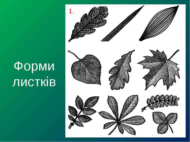 Форми листків 1.