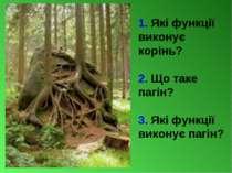 1. Які функції виконує корінь? 2. Що таке пагін? 3. Які функції виконує пагін?