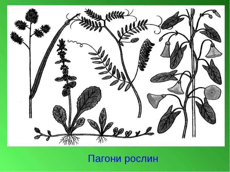 Пагони рослин