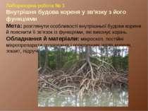 Лабораторна робота № 3. Внутрішня будова кореня у зв'язку з його функціями Ме...