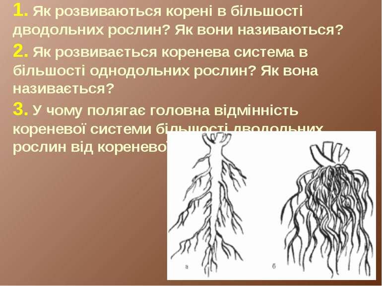 1. Як розвиваються корені в більшості дводольних рослин? Як вони називаються?...